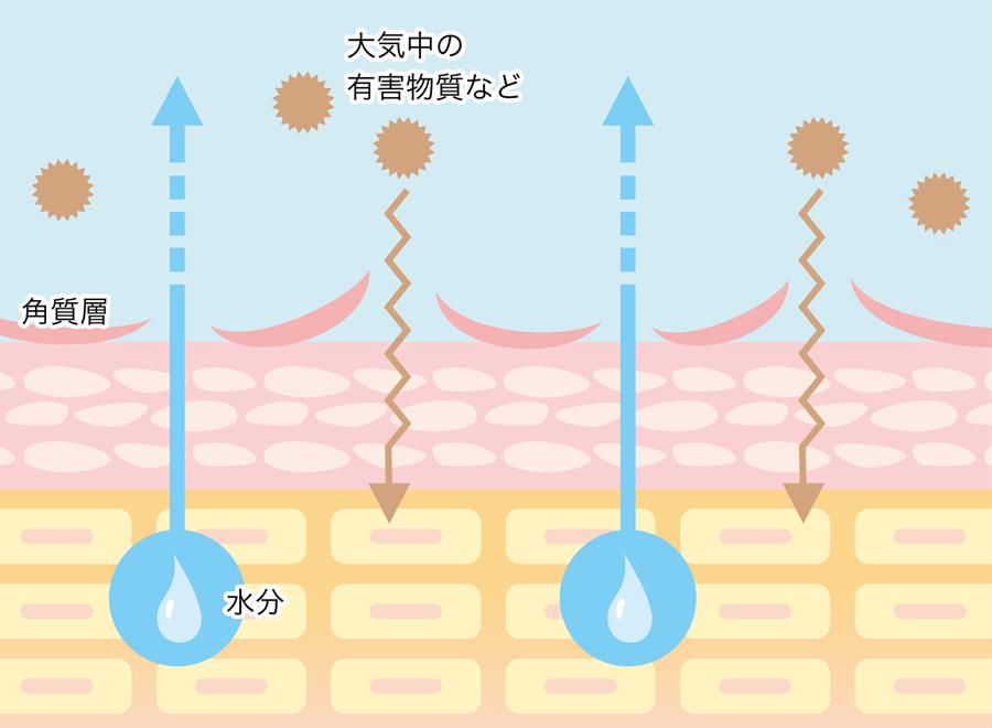 原因①肌の乾燥と肌荒れによって肌の表面(角質)がめくれているから