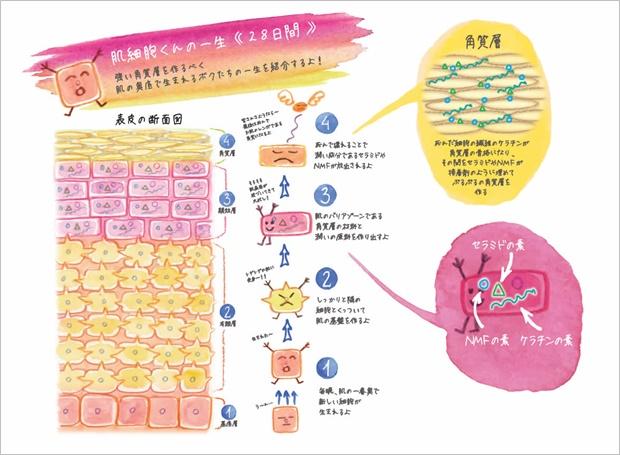 細胞の一生