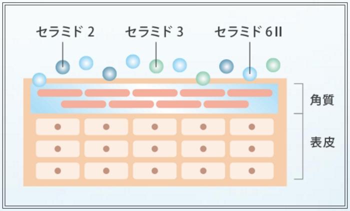 ナノ化されたセラミドで潤いを満たす(リポソーム化セラミド(保湿、皮膚保護))