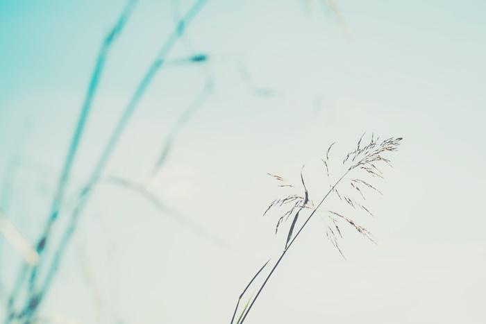 乾燥や紫外線によるダメージから肌を守る「エクトイン」配合!バリア機能を高めてうるおいをキープ